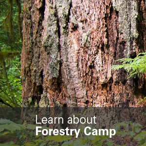 Learn about Forestry Camp