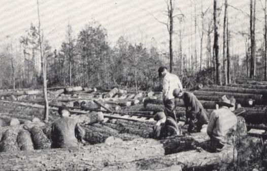 Young men among cut logs, 1915