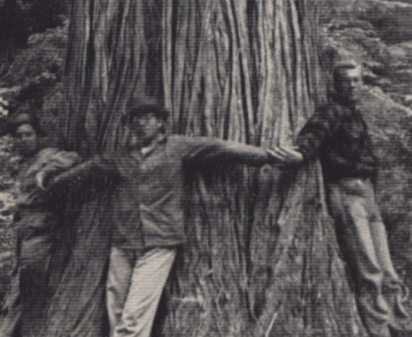 Three men hold hands around the trunk of a ginormous tree.