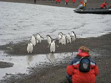 Photograph of Maegan with some penguins