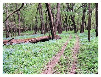 Brayton forest scene