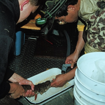 Biologist and grad student sample fish for an annual consumption model