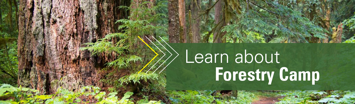 Banner image that says Learn about Forestry Camp