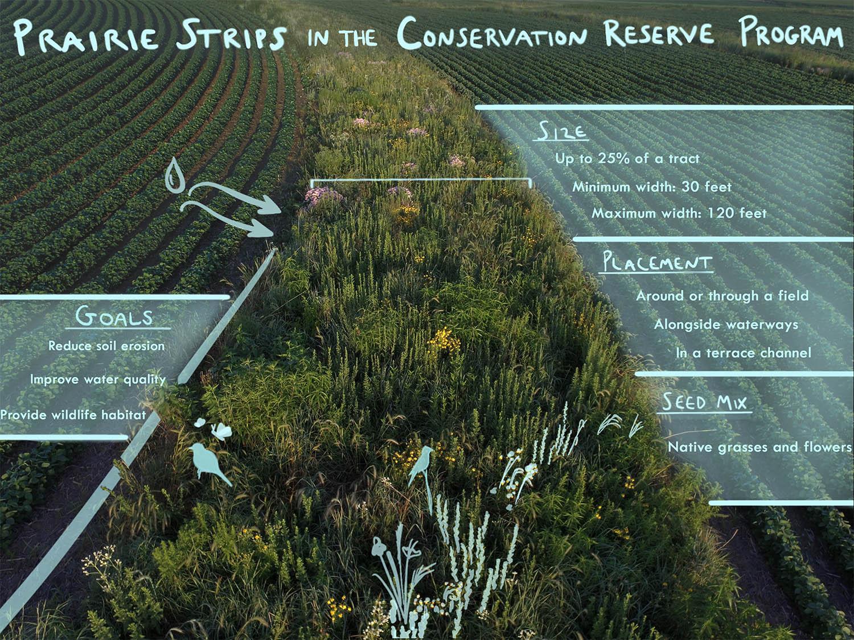 Photo of a prairie strip with overlaid diagram