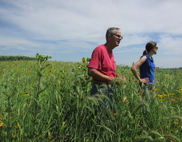 Tim Smith shows off his prairie strips, August 2016
